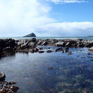 Wembury rockpool © Devon Wildlife Trust